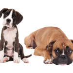 Kvalitní krmivo pro psy
