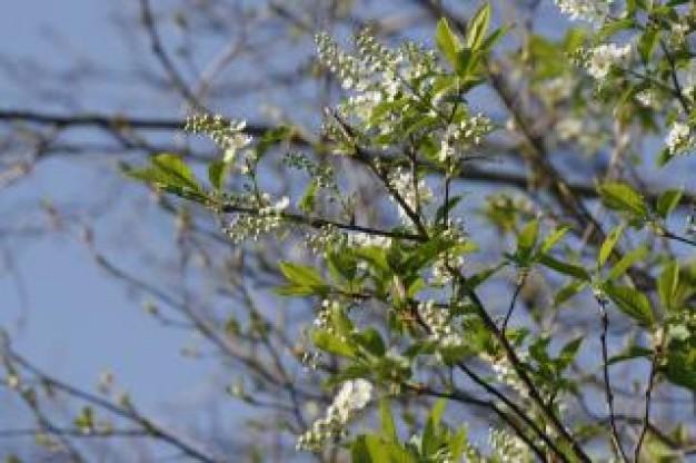 Zvelebte stromy na vaší zahradě