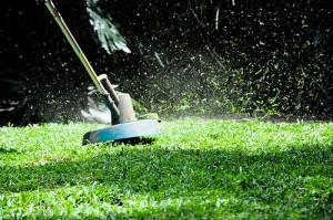 Výsadba trávníku – postup jak na to