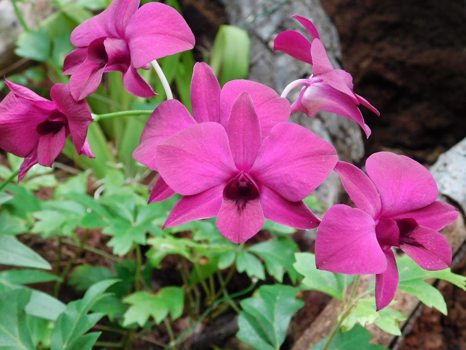 Květiny vhodné na balkón