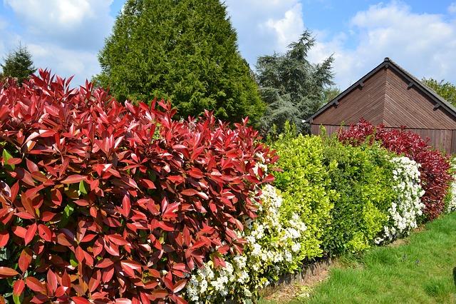 hedge-891354_640