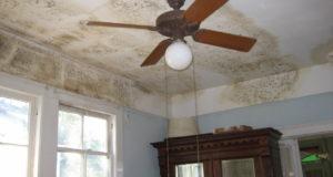 Plíseň v domě dokáže pořádně potrápit