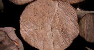 Zbavte se stromu rychle a jednoduše, pomůže vám rizikové kácení stromů