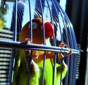 lovebird-1491663_960_720