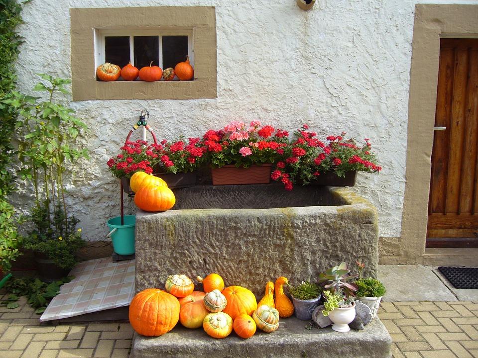 Dekorace ze sušených rostlin